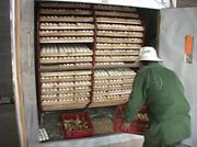 Hà Quảng: Mô hình lò ấp trứng nhân giống gia cầm đi vào hoạt động