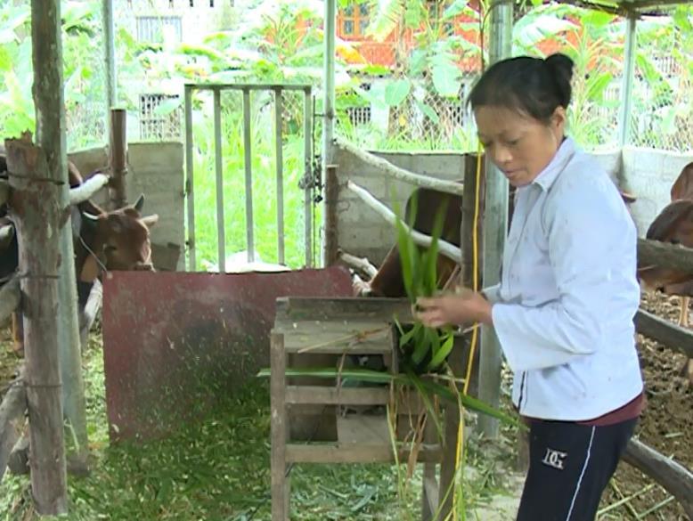 Nghị lực vươn lên của một phụ nữ nông thôn