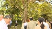 Trùng Khánh: Cây dẻ cổ thụ tại Chí Viễn được công nhận là Cây di sản Việt Nam