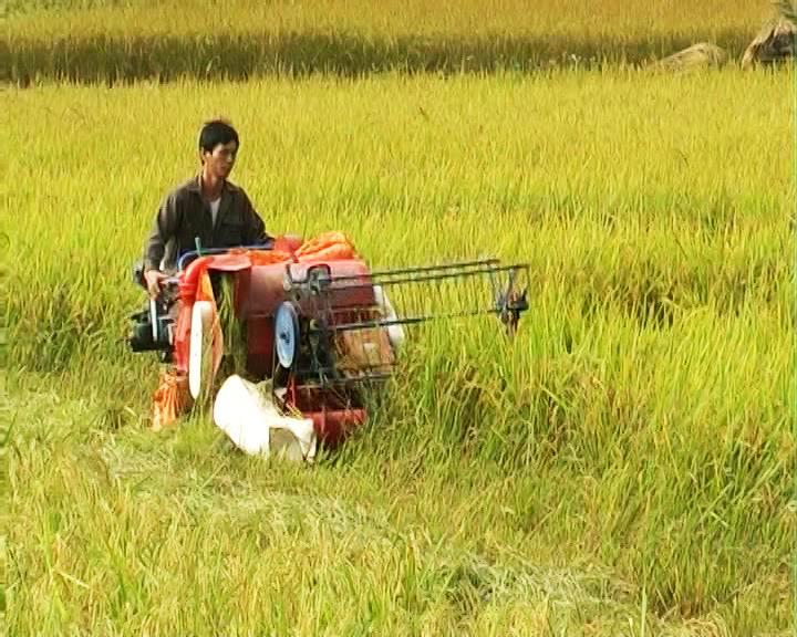 Thạch An: 8.819 hộ đạt danh hiệu nông dân sản xuất kinh doanh giỏi  giai đoạn 2012 – 2016
