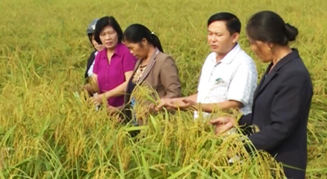 Phát huy vai trò đội ngũ trí thức trong xây dựng nông thôn mới