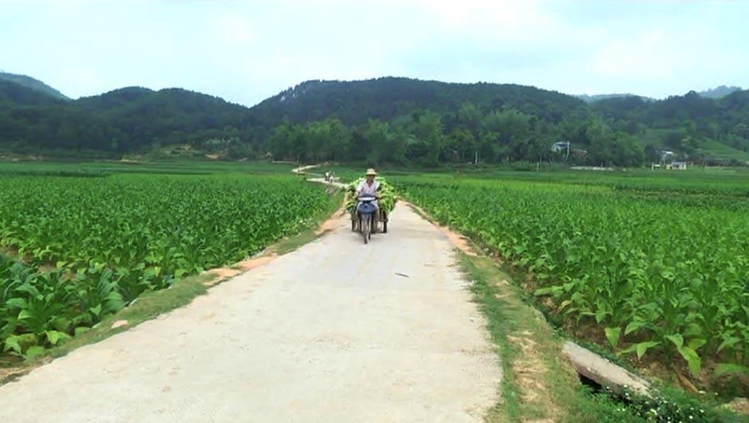 Đào Ngạn phấn đấu về đích nông thôn mới trong năm 2017