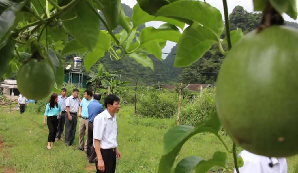Kiểm tra tiến độ xây dựng nông thôn mới tại xã Cao Chương (Trà Lĩnh)