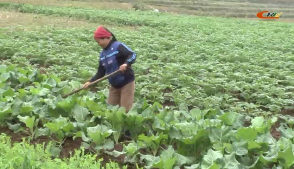 Chu Trinh khắc phục khó khăn, nỗ lực xây dựng nông thôn mới