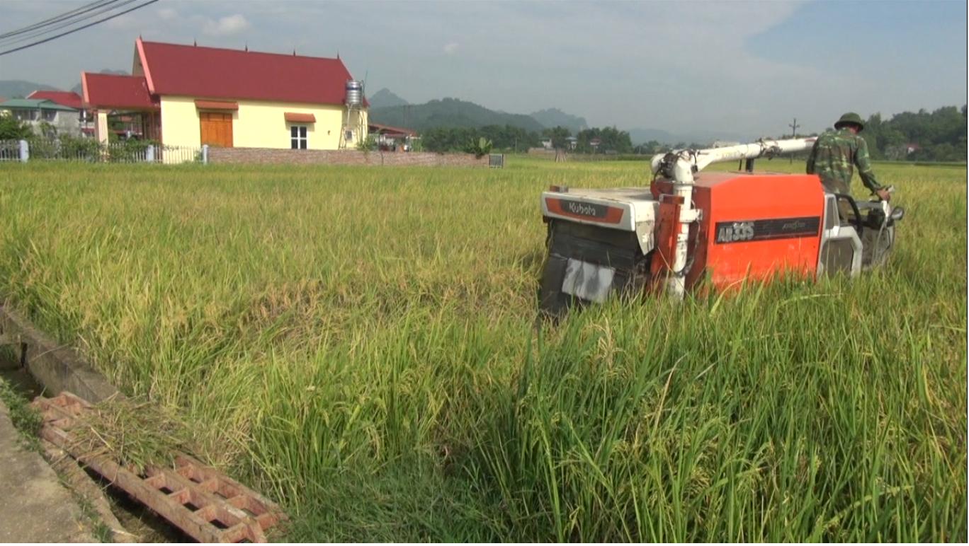 Khởi sắc từ tái cơ cấu nông nghiệp gắn với xây dựng nông thôn mới