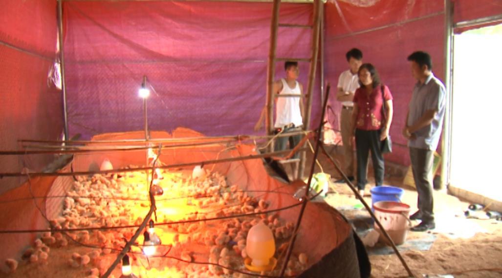 Tín hiệu tích cực trong thực hiện đào tạo nghề cho lao động nông thôn ở Phục Hòa