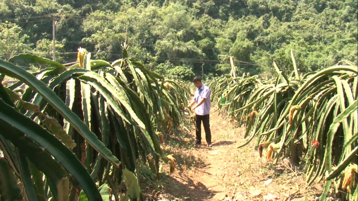 Phục Hòa đẩy mạnh chuyển dịch cơ cấu nông nghiệp theo hướng hàng hóa