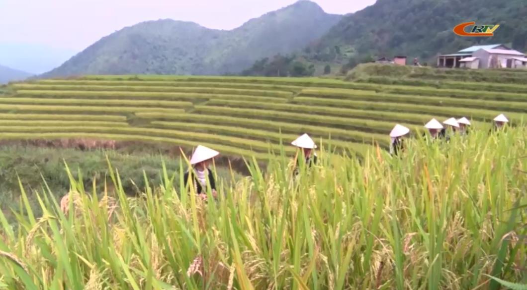 Xã Thành Công (Nguyên Bình) mới đạt 6/19 tiêu chí nông thôn mới
