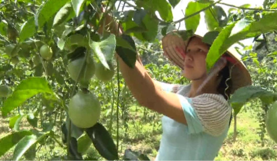 Cao Bằng phát huy tiềm năng phát triển nông, lâm nghiệp trong cơ cấu kinh tế