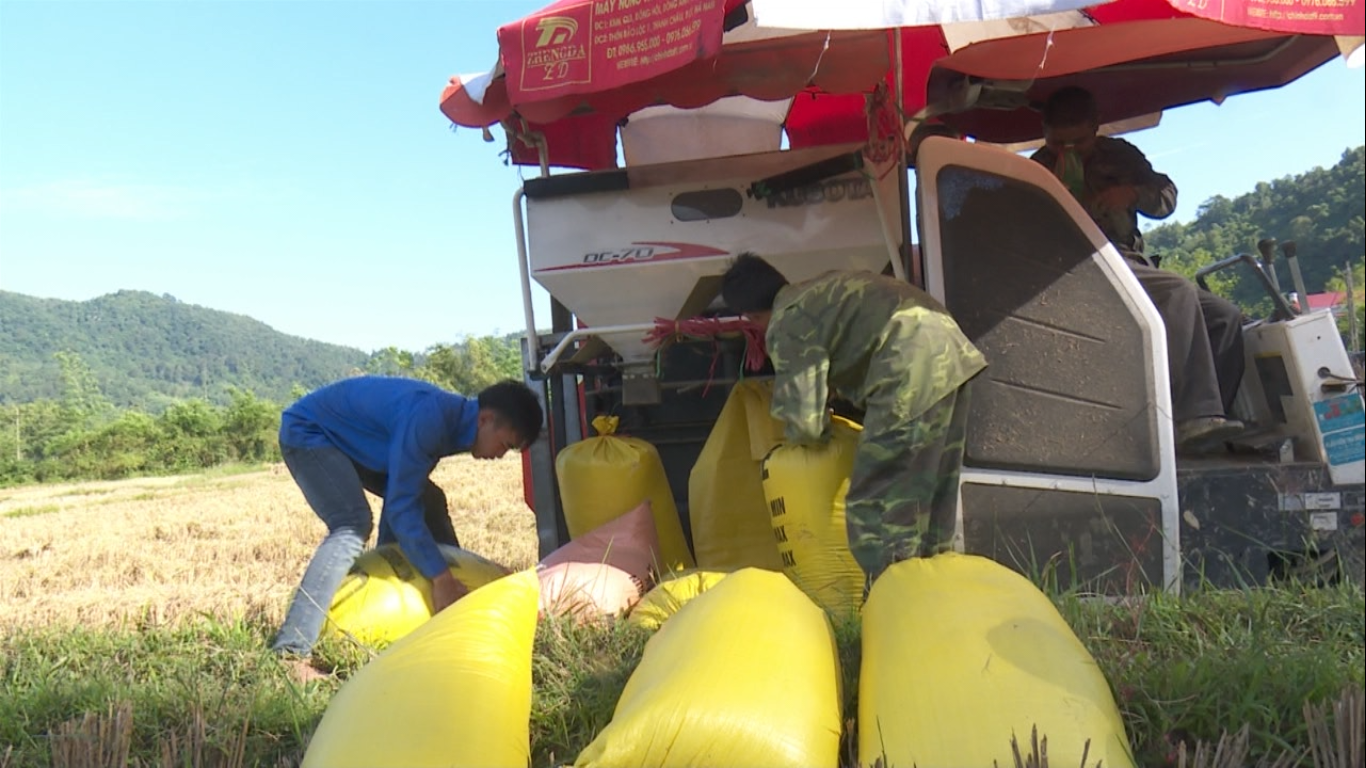 Thông Nông: Xã Đa Thông hoàn thành thu hoạch lúa vụ hè thu