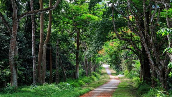 Tiêu chí xác định rừng đặc dụng