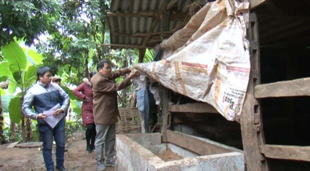 Phục Hòa: Cần triển khai tốt hơn các biện pháp phòng chống đói, rét cho đàn vật nuôi