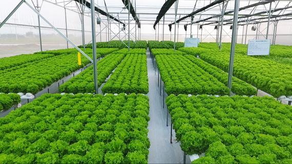 Hướng dẫn chính sách khuyến khích DN đầu tư vào nông nghiệp, nông thôn