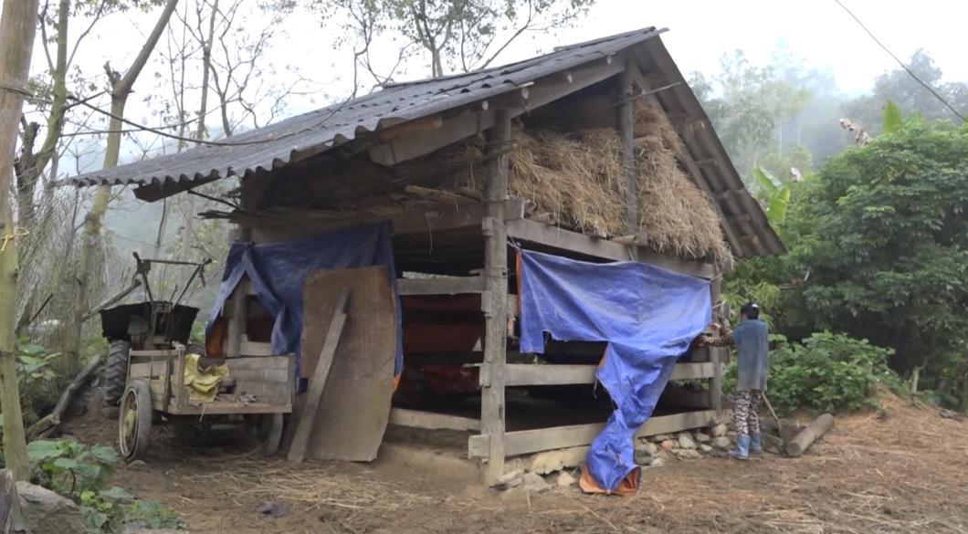 Thạch An: Tăng cường tuyên truyền phòng chống đói, rét cho đàn vật nuôi những ngày giá lạnh
