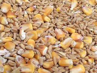 Đề xuất 19 sản phẩm thức ăn chăn nuôi theo tập quán