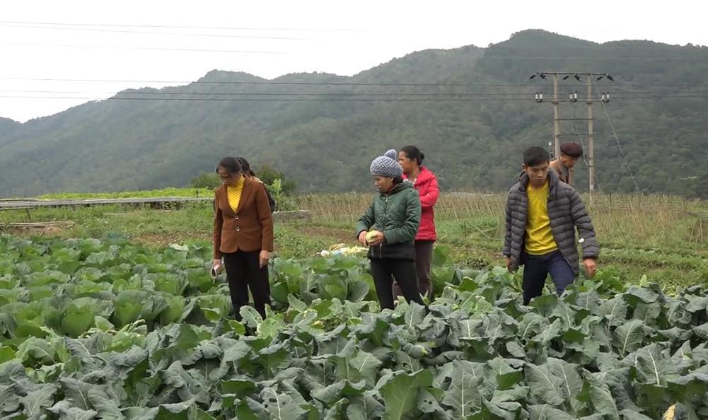Cao Bằng tập trung phát triển nông nghiệp hữu cơ