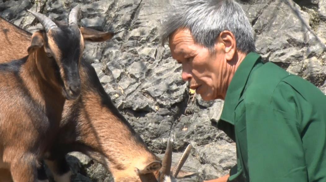 Cựu chiến binh Nông Văn Chu phát triển kinh tế từ mô hình trồng trọt, chăn nuôi