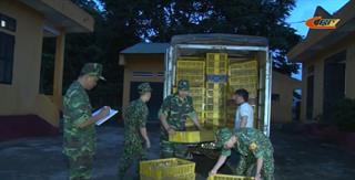 Trùng Khánh: Bắt giữ vụ vận chuyển 7.000 con giống gia cầm nhập lậu