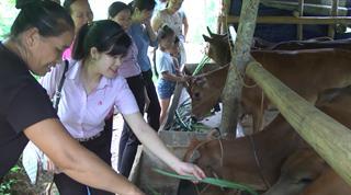 Ngân hàng CSXH huyện Bảo Lạc góp phần tích cực trong công tác giảm nghèo bền vững tại địa phương