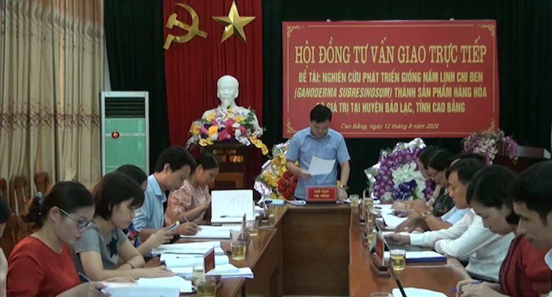 Nghiên cứu phát triển giống nấm linh chi đen tại huyện Bảo Lạc