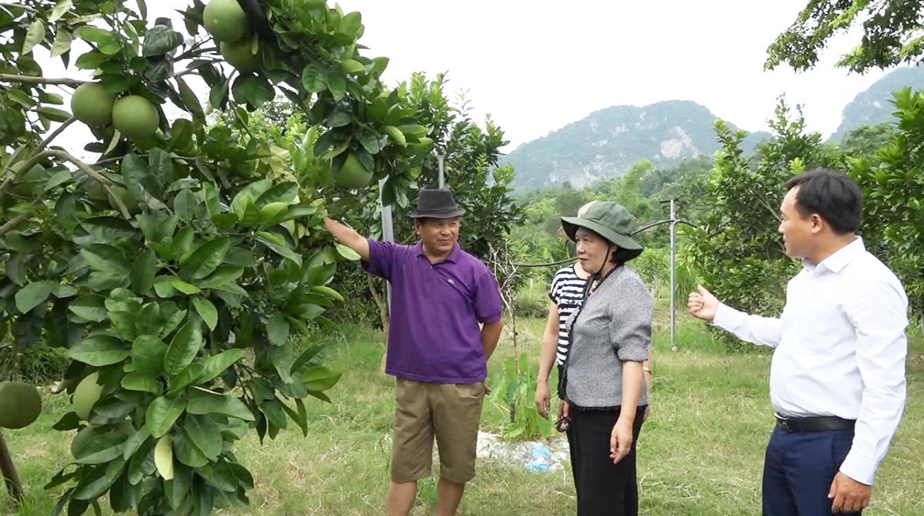 Trung tá về hưu với mô hình cây ăn quả cho thu nhập hơn 400 triệu đồng/năm