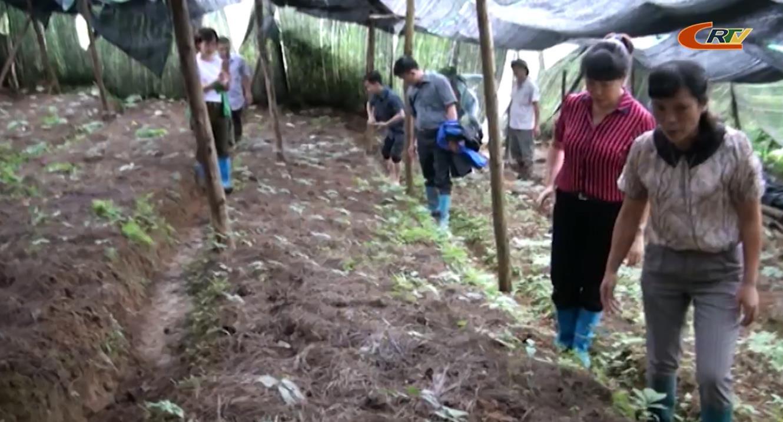 """Kiểm tra tiến độ thực hiện dự án """"Nghiên cứu kỹ thuật nhân giống và phát triển sản xuất cây tam thất tại huyện Hà Quảng"""""""