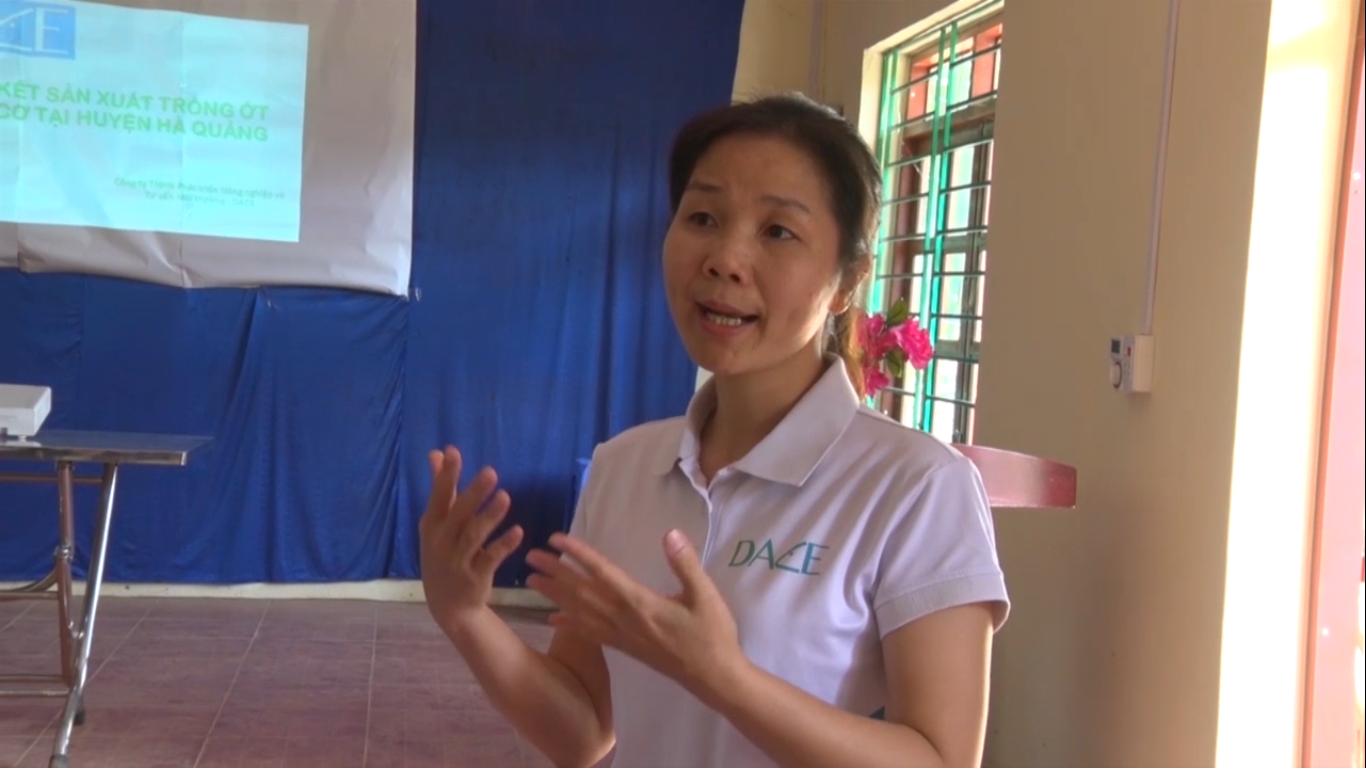 Hòa An: Tập huấn quy trình kỹ thuật trồng ớt chỉ thiên hữu cơ