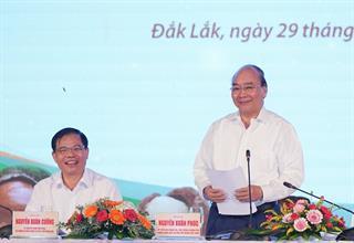 Thủ tướng Nguyễn Xuân Phúc: Các địa phương cần xây dựng chiến lược phát triển cây mắc ca ở Việt Nam