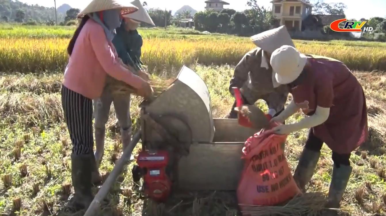 Toàn tỉnh: Tổng sản lượng lương thực có hạt vụ mùa ước đạt 160.776 tấn