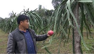 Hiệu quả kinh tế cao từ cây ăn quả