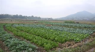 Huyện Hòa An hỗ trợ nông dân tiêu thụ nông sản